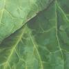 leaf#2