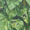 leaf#1