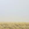 F/E -grass-